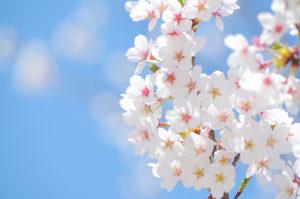 4月は白い歯強化月間